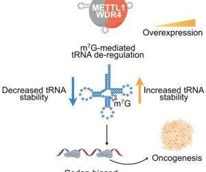 Milner collaboration with Harvard University and the Wellcome Sanger Institute uncovers promising target for new drug development